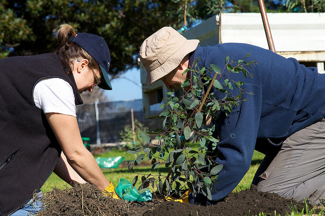 A man and woman plant a small tree
