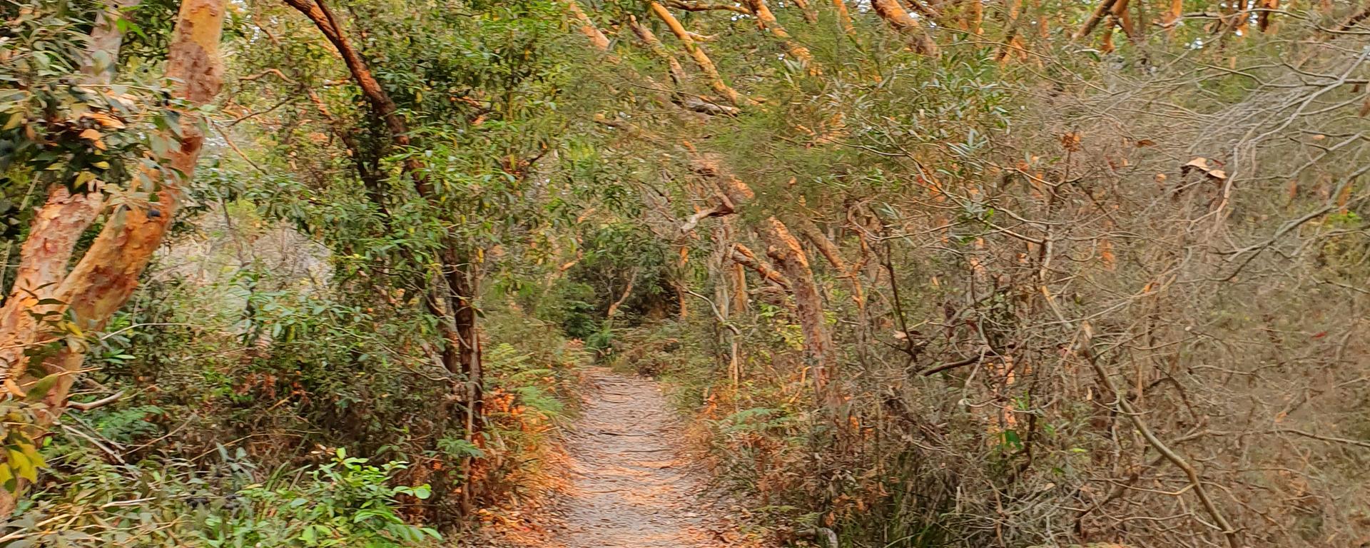 Path in the bush, in La Perouse,Sydney
