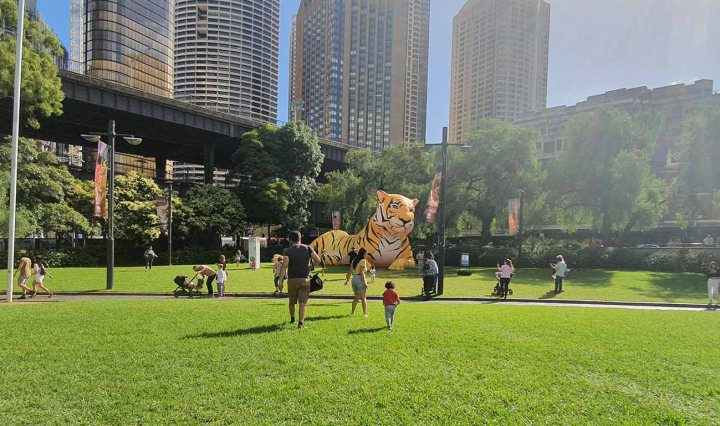 A sunny day. People walk across Circular Quay park. An inflatable tiger is lying down. Tall buildings of Sydney CBD in the far background